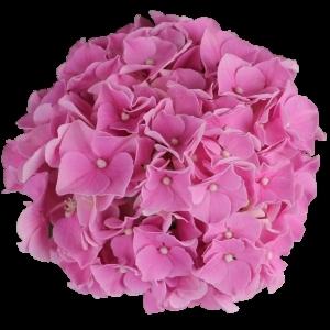 PinkFavorite sortsvisning 630x630 w300 h300 i