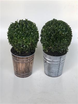 Nieuwe potten
