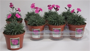 voorbeeld transparante tray en fotosticker