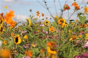 Foto 2 Duurzaamheid bloemenwal