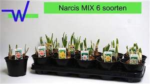 Narcis mix 6 soorten