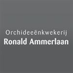 Ronald-Ammerlaan