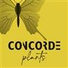 Concorde-Orchids