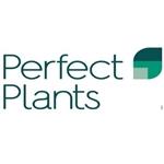 Pothos-Plant-Nederland-BV