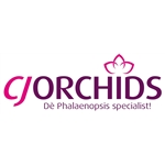 CJ-Orchids