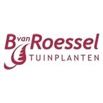 B-van-Roessel-Tuinplanten
