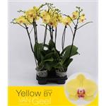 Van-Geel-Orchideeën-BV