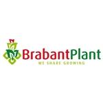 Brabant-Plant