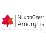 NL-van-Geest-Amaryllis