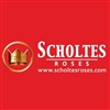 Scholtes-Roses