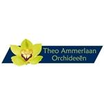 Theo-Ammerlaan-Orchideeën