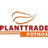 Plant-Trade-International-Bv
