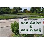 Van-Aalst-en-Van-Waaij
