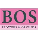 Bos-Flowers-en-Orchids-–-Freesia