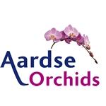 Aardse-Orchids