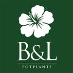 B-en-L-Plants-VOF