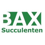 Bax-Succulenten