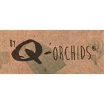 Q-Orchids