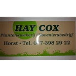 HLM-Cox