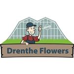 Drenthe-Flowers