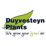 Duyvesteyn-Plants