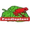 Kwekerij-Fondieplant