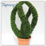 Topiarynl
