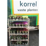 Korrel-Plant-BV