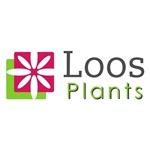 Loos-Plants
