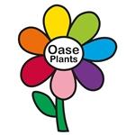 Oase-Plants