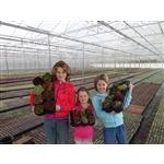 VOF-Plantenkwekerij-van-Rijn