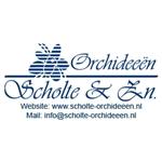 Scholte-Orchideeën