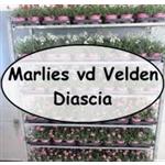 VOF-M-vd-Velden