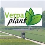 Verpa-Plant