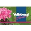 Vollebregt-Cyclamen