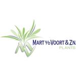 Kwekerij-Mart-van-der-Voort