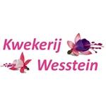 AA-kwekerij-Wesstein
