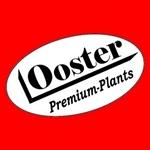 Gartenbau-Reiner-Ooster
