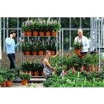 Van-der-Sar-Plants