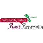 BestBromelia