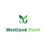 Westland-Plant