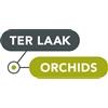 Ter-Laak-Orchids-Midiflora