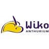 Wiko-Anthurium