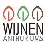Anthuriumkwekerij-Wijnen