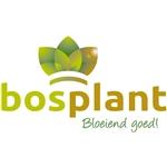 Bosplant