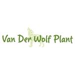 Van-der-Wolf-Plant