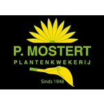 Plantenkwekerij-P-Mostert