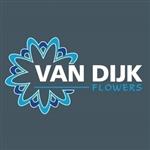Van-Dijk-Flowers