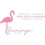 Flamingo-Plant
