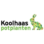 Koolhaas-potplanten